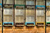 Bees car 2 — Stock Photo