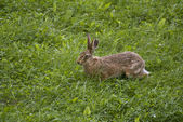 Rabbit 2 — Stock Photo