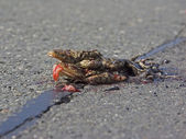Roadkill 2 — Stock Photo