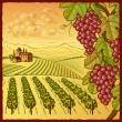 Royalty-Free Stock Vector Image: Vineyard landscape