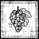 Retro grapes bunch black and white — Stock Vector