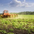 Tractor. Field. Sunflower. Cultivation. — Stock Photo #6020873