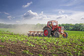 Tractor. Field. Sunflower. Cultivation. — Stock Photo
