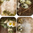 Four grunge nature postcards. - Stock Photo