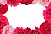 Rose border — Stock Photo