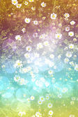 Bright daisy field background — Stock Photo