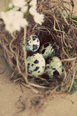 Vintage quail nest with eggs — Stock Photo