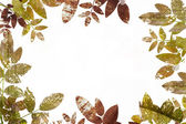 Grunge leaves border — Stock Photo