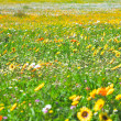 Spring flowers field — Stock Photo