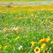Spring flowers field - Stock Photo