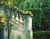 Green garden in France — Stock Photo