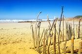 Knysna, Güney africa.stretch knysna, Güney plaj plaj streç — Stok fotoğraf