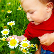 Boy in flowers — Stock Photo