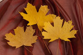 Yellow leaves on a fabric — Stock Photo