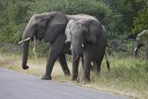 Elephant's — Stock Photo