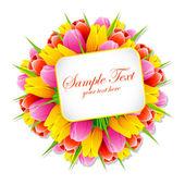 Banda tulipán se značkou — Stock vektor