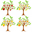 Stock Vector: Fruit Tree