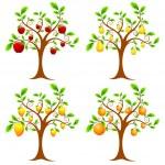Fruit Tree — Stock Vector