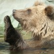 Brown bear sits in water — Foto de stock #6400701