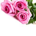 Pink fresh roses — Stock Photo