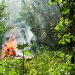 brand in het bos — Stockfoto