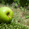 Fresh apple on a green grass — Stock Photo #5877705