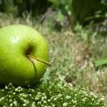 Fresh apple on a green grass — Stock Photo