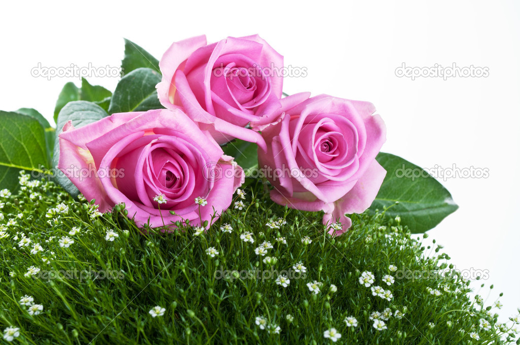 Pink roses on green grass isolated on a white background — Photo #5877592