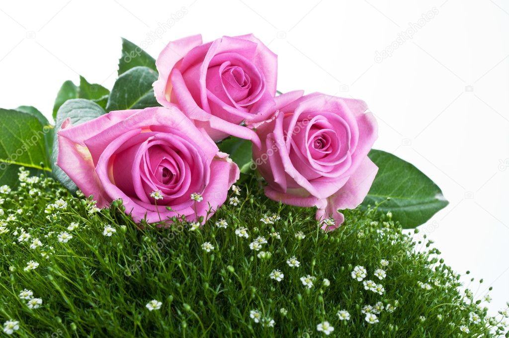 Pink roses on green grass isolated on a white background — 图库照片 #5877592