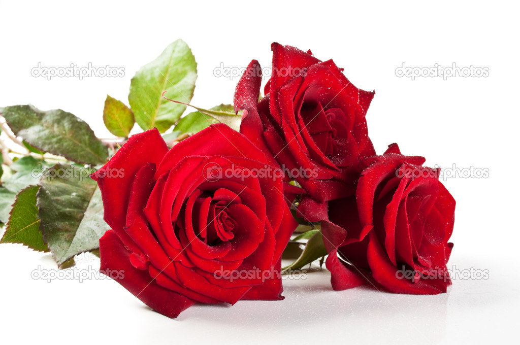 Red roses isolated on a white background — Photo #5877608