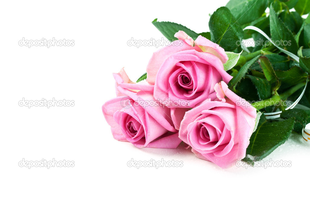 Pink fresh roses isolated on a white background — Stock Photo #5995346