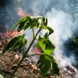 pericolo per l'ambiente — Foto Stock