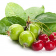 Fresh cherry and apples — Stock Photo