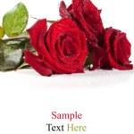 Rose rosse con gocce d'acqua — Foto Stock