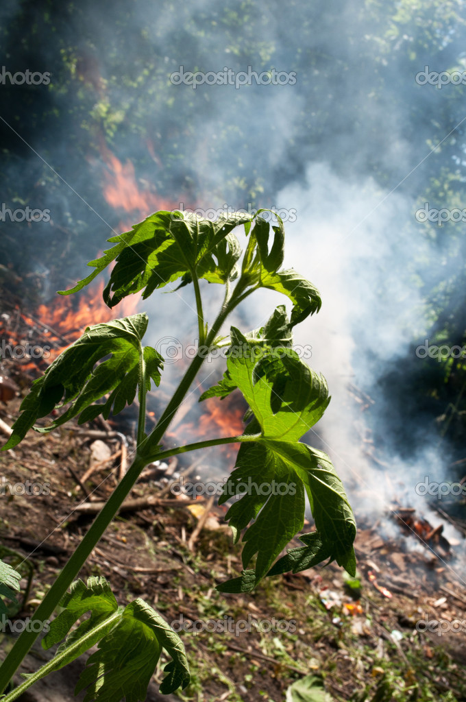 Fire in the forest, danger in the environment  — Stock Photo #6145739