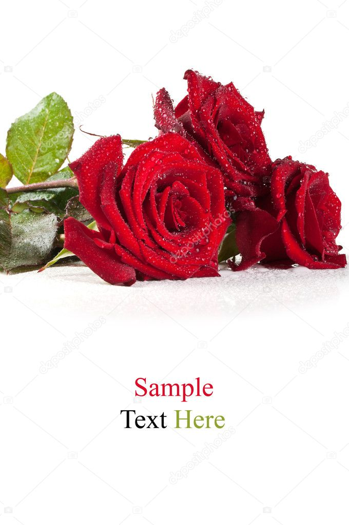 Red roses with water drops isolated on a white background  Stock Photo #6146946