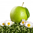 Fresh apple on a green grass — Stock Photo