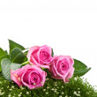Foto Stock: Pink roses on green grass