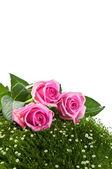 Róż na zielonej trawie — Zdjęcie stockowe