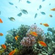 Coral scene on the reef — Stock Photo