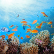 Coral scene on reef — Stock Photo #5500592
