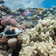 Coral reef scene — Stock Photo #5590579