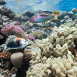 Coral reef scene — Stock Photo
