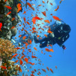 Stock Photo: Diver on coral reef