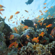 Stock Photo: Coral scene on the reef
