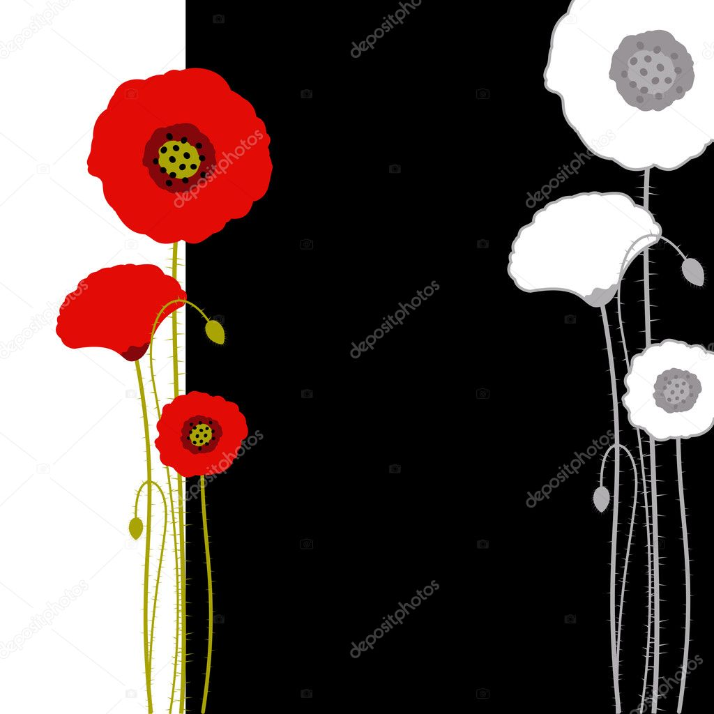 Abstract red poppy on black and white background — Stock Vector #5388533