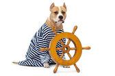 Pies i koła pojazdu — Zdjęcie stockowe