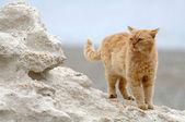 большие кошки стоит на скале — Стоковое фото