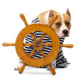 Stock Photo: Dog and wheel vehicle