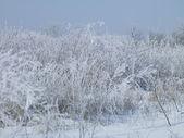 Zimowe sylwetka — Zdjęcie stockowe